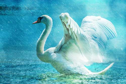 Dream Symbols - A swan's grace - What might this means to you about something going on in daily life?